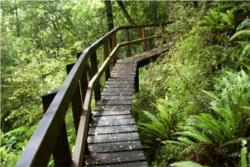 3 Day Hollyford Track Guided Walk