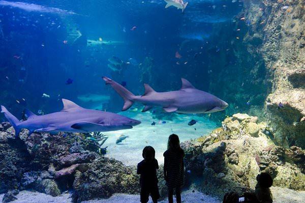 sea sydney aquarium