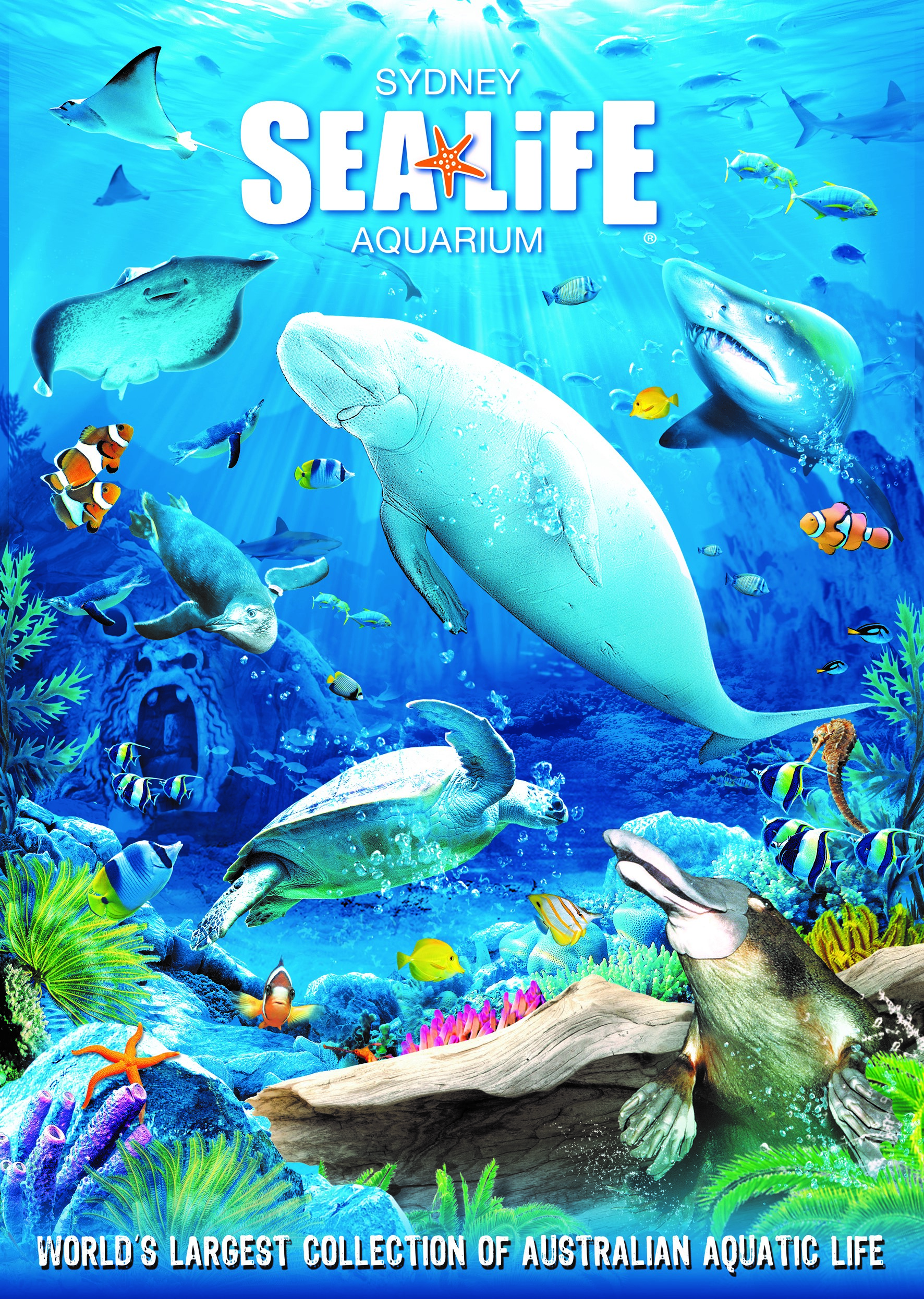 aquarium life Welcome to aquarium lives centre llc: we are one of premium distributor of aquatic, pets, birds and rodents products in uae, oman, qatar and bahrain.