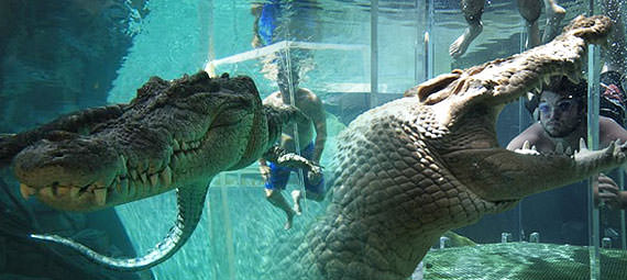 SWIM WITH THE CROCS AT CROCOSAURUS COVE